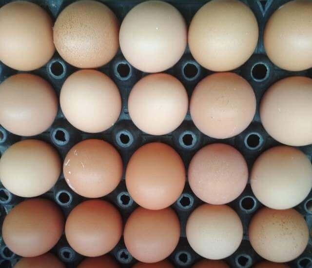 bird flu, H9N2 in poultry h5n2 in poultry, Low Pathogenic Avian Influenza (LPAI) In Poultry, LPAI in poultry