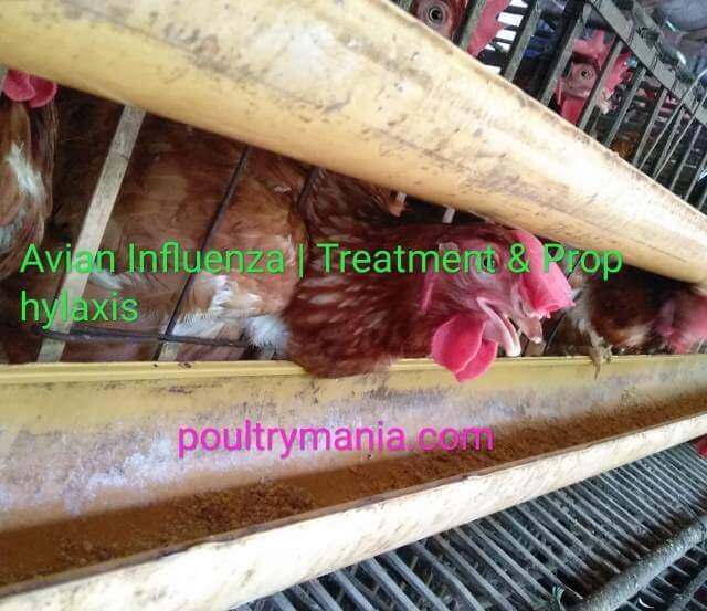 Treatment of Bird Flu