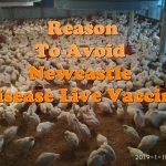 Top 7 Reasons To Avoid Newcastle Live Vaccine