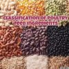 Classification of Poultry feed ingredients